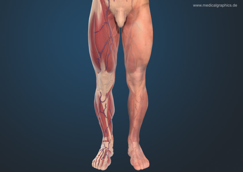 Ten Things To Avoid If You Have Lower Limb Tendon Pain Fascial